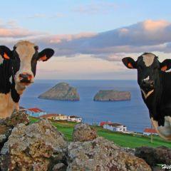 Casa Dos Cotas (Azores)